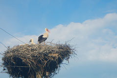 Stork birsd. Stork bird in its nest with stock photos