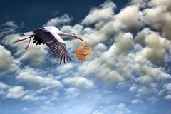 Stork bringing baby in basket. Stork in flight bringing baby in basket on cloudy sky background Stock Photography