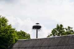 Stork builds her nest on a pole near the roof Stock Photo