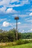 Stork chicks Stock Image