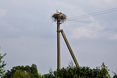 Stork with chicks in a nest on a pole power lines Stock Photos