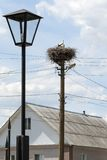 Stork with children in the nest on a pole Stock Photos