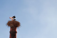 Stork on a chimney Royalty Free Stock Images