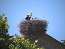 Stork on Church at Skala Kalloni Lesvos Greece. Nature Reserve at Skala Kalloni on the island of Lesvos, or Lesbos stock image