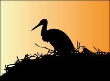 Free Stork (Ciconia) Royalty Free Stock Images - 13530639