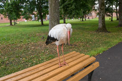 Stork in the city Stock Photography