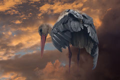 Stork and colorful clouds. Mystic stork stands on the clouds and looks at the ground stock image