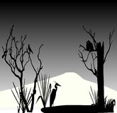 Stork and couple of pigeon silhouette Stock Image