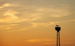 Stork couple at sunset Royalty Free Stock Photo