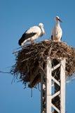 Stork couple. White stork couple in the nest Stock Image