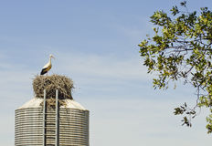 Stork on deposit Stock Image