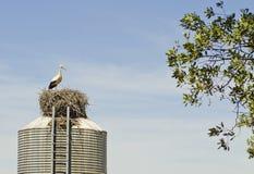 Stork on deposit. Stork make nest on industrial deposit Stock Image