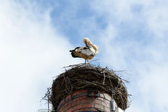 Stork dressing up in the nest Royalty Free Stock Photos