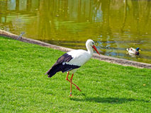 Stork and duck on a zoo Royalty Free Stock Photos