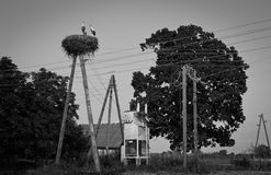 Stork and electric wires. Landscape with electric wires, stork and strange shaped oak Stock Images