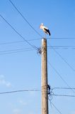 Stork on electricity pole Stock Photography
