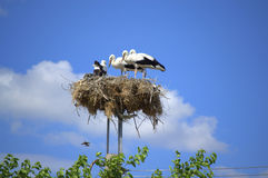 Stork family home Royalty Free Stock Photography