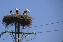 Stork family living in nest on electric pole against blue sky in Andalusia, Spain stock photos