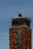 Stork family. On the stack royalty free stock images