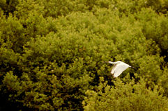 Stork flies stock photos