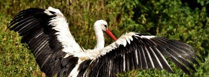 Stork, Fly, Bird, White Stork Royalty Free Stock Photo