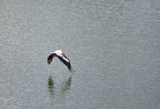 Stork fly on Pelagic Royalty Free Stock Image