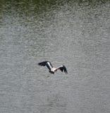 Stork fly on Pelagic Royalty Free Stock Photo