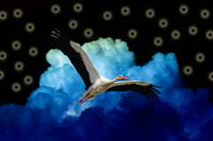 Stork Flying in Black Magic Sky with Blue Clouds Stock Photos
