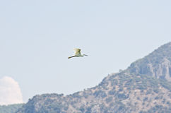 Stork flying over mountains Stock Photography