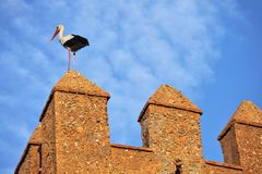Stork on fortress wall Stock Images