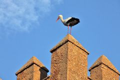 Stork on fortress wall Stock Photo