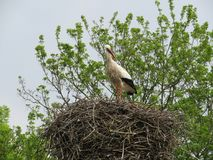 A Stork high up in nest Royalty Free Stock Photos
