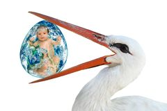 Stork holding in its beak an egg with a baby royalty free stock image