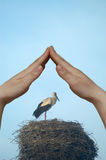 STORK I Stock Photos