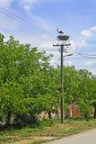 Stork i bygga bo Royaltyfria Foton
