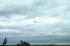 Stork i ett fält Arkivbild