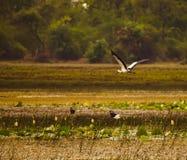 Stork i gryningen Arkivbild