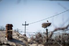 Stork i rede på pol i en by royaltyfri fotografi