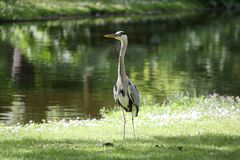 Stork i solen Arkivfoto