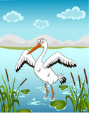Stork. Illustration of a stork in a pond Stock Photography
