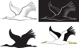 Stork. Isolated flying stork - clip art illustration and line art Royalty Free Stock Photography