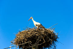 Stork in its nest Royalty Free Stock Images
