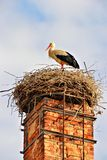 A stork in its nest Stock Photography