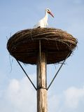 Stork in its nest. Park Avifauna, the Netherlands Stock Photography