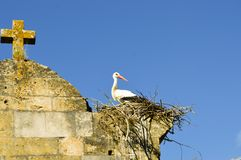 Stork in its nest perched on the portico of the church Stock Photography