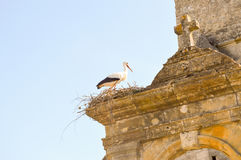 Stork in its nest perched on the portico Royalty Free Stock Images