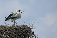 Stork in its nest Royalty Free Stock Photos