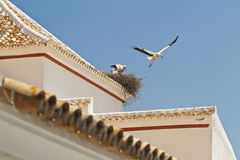 Stork jump Royalty Free Stock Images