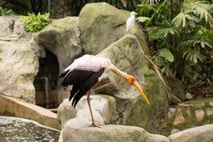 Stork in Kuala Lumpur Bird park Stock Photo