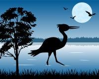 Stork on lake Stock Photography